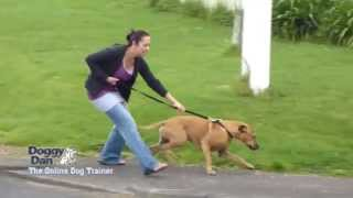 Leash Training a Dog | Leash Training a Puppy