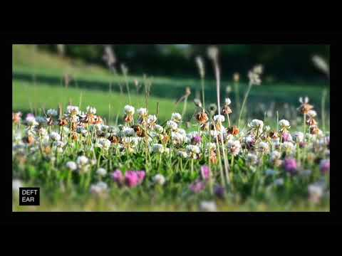 Audio Experiences - Country Meadow | RELAXATION | SLEEP | MINDFULNESS | STUDY | SOUNDS OF NATURE