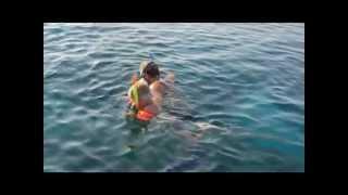 На берегу Красного моря (home video)
