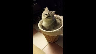 FUNNY CATS  =))) Cat Fails 2018