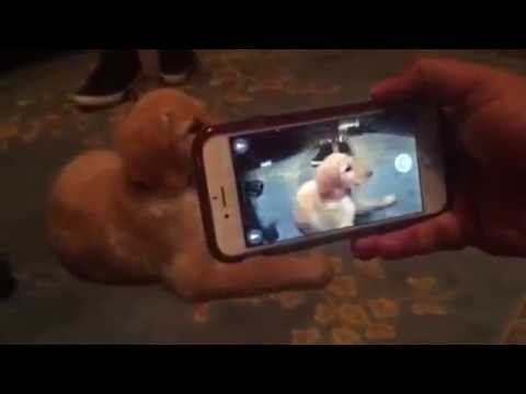 """Blippar Visual Search Demo With a Puppy!"""
