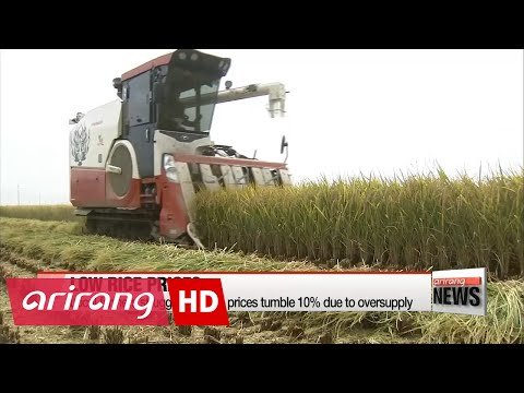 Local farmers struggling as rice prices tumble 10% amid oversupply