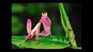Top 15 coolest Praying mantis