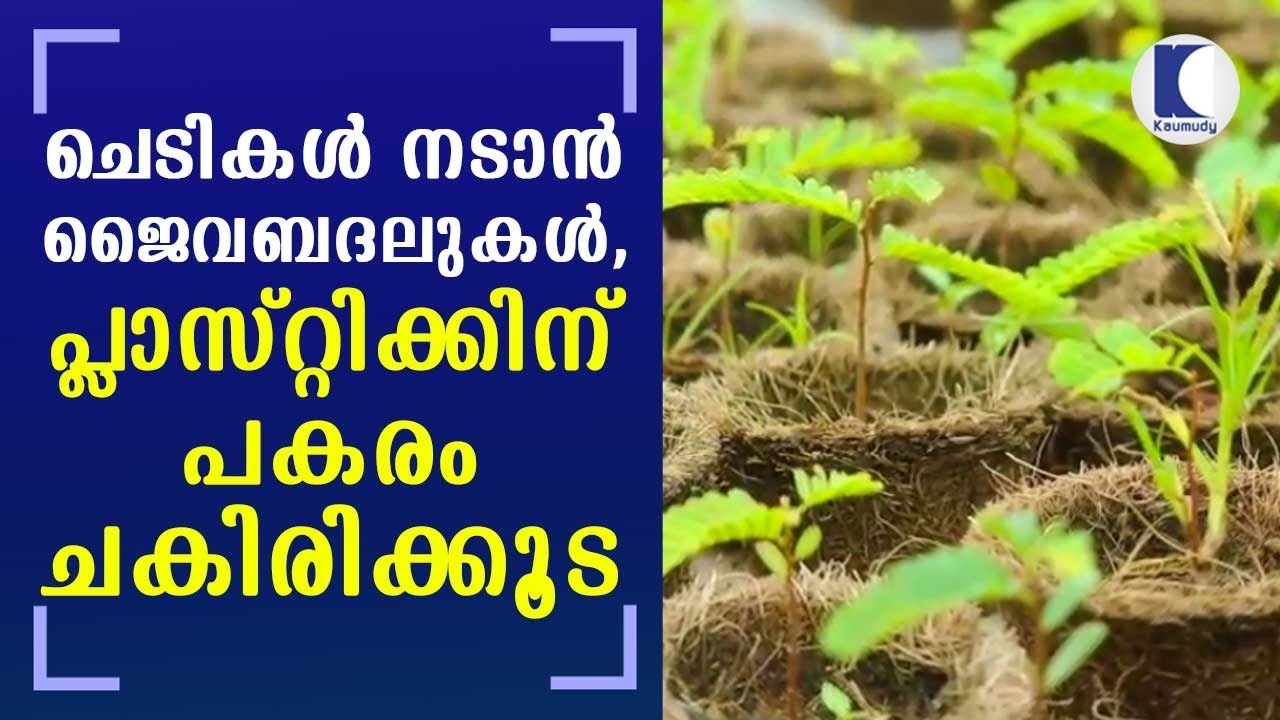 Download Organic alternatives for planting plants; Coir, a better option to Plastic | Kaumudy