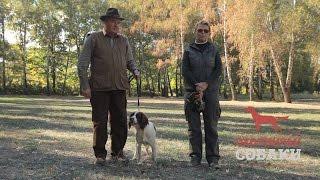 Охотничьи собаки. 8 серия. Английский спрингер-спаниель