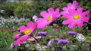 Цветы Августа!
