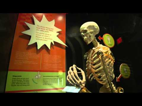 The Health Museum, An Introduction