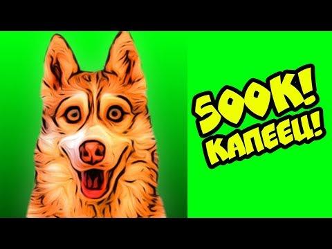 КЛИП НА ПОЛЛЯМА ПОДПИСЧИКОВ!! (Хаски Бублик) Говорящая собака Mister Booble собака