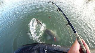 Ловля СОМА на КВОК в стиле Снасти Здрасьте! Рыбалка на сома с Виталием Дальке.
