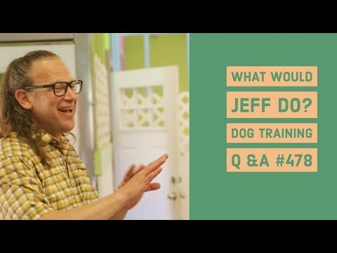 Dog whining | Counter surfing dogs | What Would Jeff Do? Dog Training Q & A #478