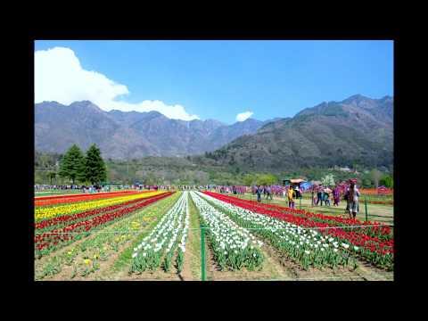 Best Of Tulip Garden Srinagar