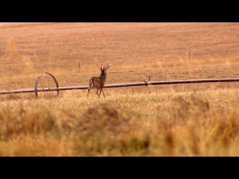 Whitetail Deer Hunting In Montana