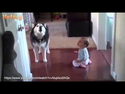 Warum jedes Ba einen Hund haben sollte Heftig