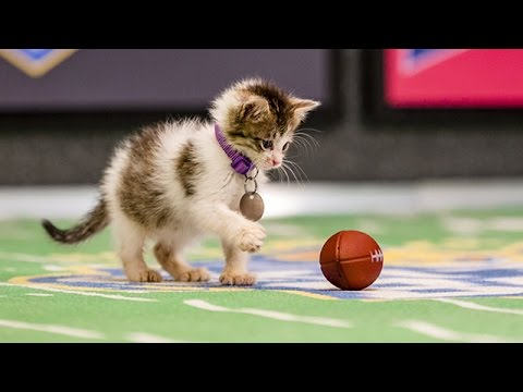 Mr. Slippers Goes Deep_ Kitten Bowl III