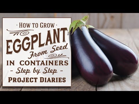 ★ How to: Grow Eggplant aka Aubergine from Seed in Containers (A Complete Step by Step Guide)
