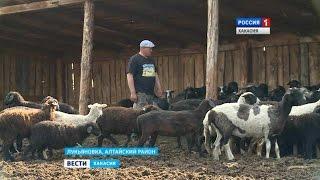 Фермеры из рук в руки передают овец. В чем суть круговорота? 29.06.2016