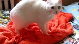 Белая кошка ищет дом.avi