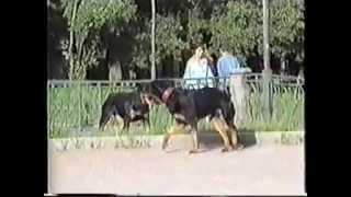 Как воспитать послушную собаку.г. Набережные Челны.