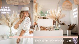 LUXE B PAMPAS GRASS Laguna Pack + Faux Pampas Vase Accents
