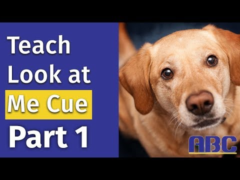 Teaching Your Dog The Look Command (Part 1)