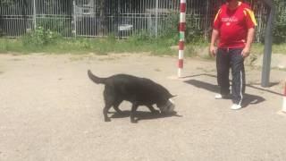Собака играет футбол😂😂😂