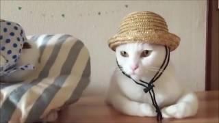 Самые смешные коты в мире! Лучшие приколы с котами 2016-2017 часть 4(CatsLIVE)