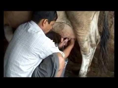 Nepal Today_Episode 100_Dairy development and hatchery