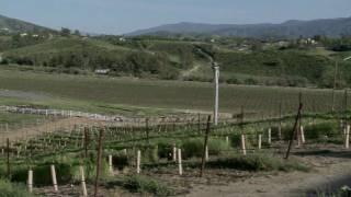 South Coast Winery in Temecula California Wine - Part 1
