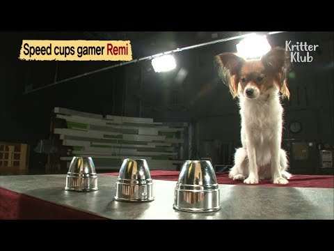 "This Smart Dog Is An Expert At Playing ""Speed Cup Game""  