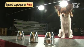 """This Smart Dog Is An Expert At Playing """"Speed Cup Game""""  