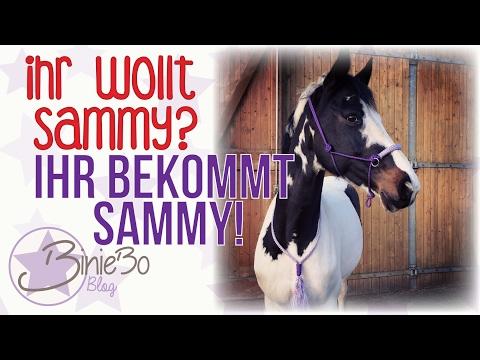 Ihr wollt Sammy? IHR BEKOMMT SAMMY!