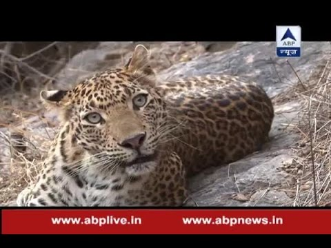 Jungle: Episode 3: Watch man-eaters leopards of Pauri Garhwal