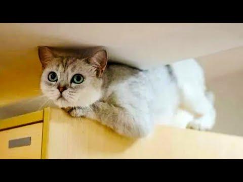 Вопрос: К каким хитростям прибегают кошки для манипуляции хозяевами?