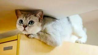 Кошка 40 дней жила одна в доме, а когда хозяева вернулись их ждало множество сюрпризов