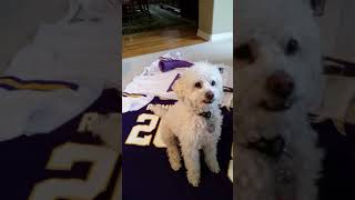 Minnesota Vikings vs. New Orleans Saints NFC Divisional Playoff Game 2018 - who will win?  Bo knows!