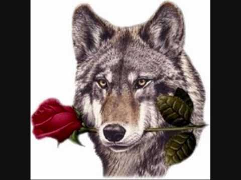 cancion lobo domesticado de valentin elizalde
