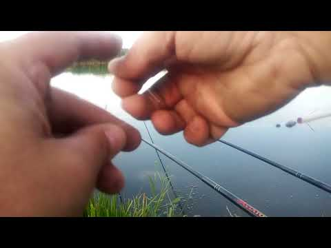 Pescuit la caras pe Lacul Boteni , si evitarea prin momeala a somnului pitic from YouTube · Duration:  12 minutes