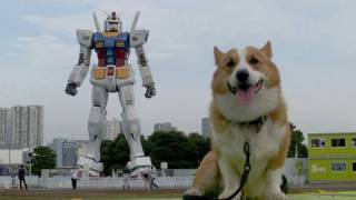 (hd) Gundam 20090714 03 Goro@welsh Corgi