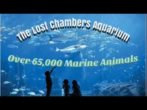 65,000 Marine Animals | The Lost Chambers Aquarium | Atlantis , The Palm- Dubai