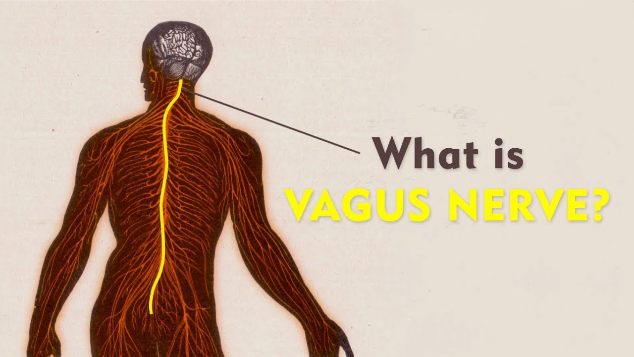 What Is The Vagus Nerve The Art Of Living Youtube