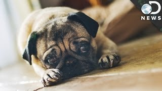 Is Your Dog A Pessimist?