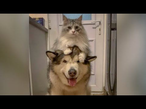 Forget vaccine – FUNNY ANIMALS are the best CORONA cure!