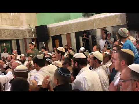 """הלל בחברון - פסח תשע""""ח - צילום: ערוץ 7"""