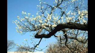 北國の春 Kitaguni no Haru   千昌夫