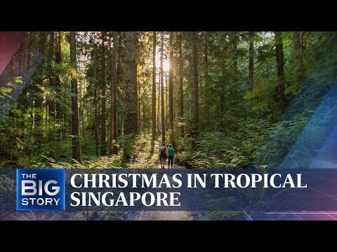 Christmas in tropical Singapore | THE BIG STORY | The Straits Times