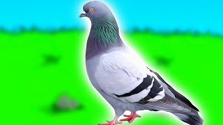 How to become a pigeon and escape life forever. thumbnail