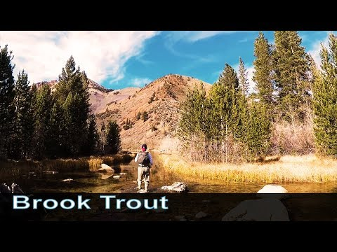 North Lake - Brook Trout - $25 Amazon Gift Card