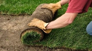 How to Plant a Lawn from Sod   Lawn & Garden Care