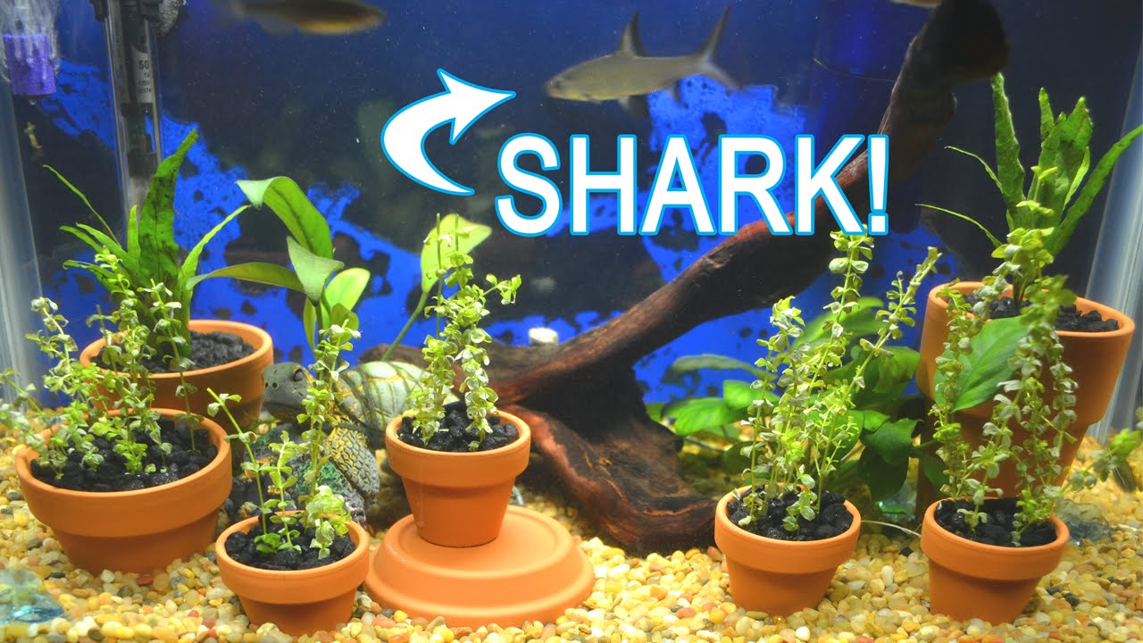 Fish aquarium with plants - Urban Farm Aquascape Fish Tank With Live Plants