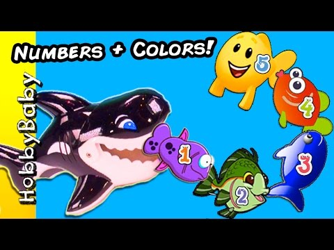 COUNTING Guppies 1-5 and Learn Colors! Whale Shark Chases Guppies HobbyBabyTV